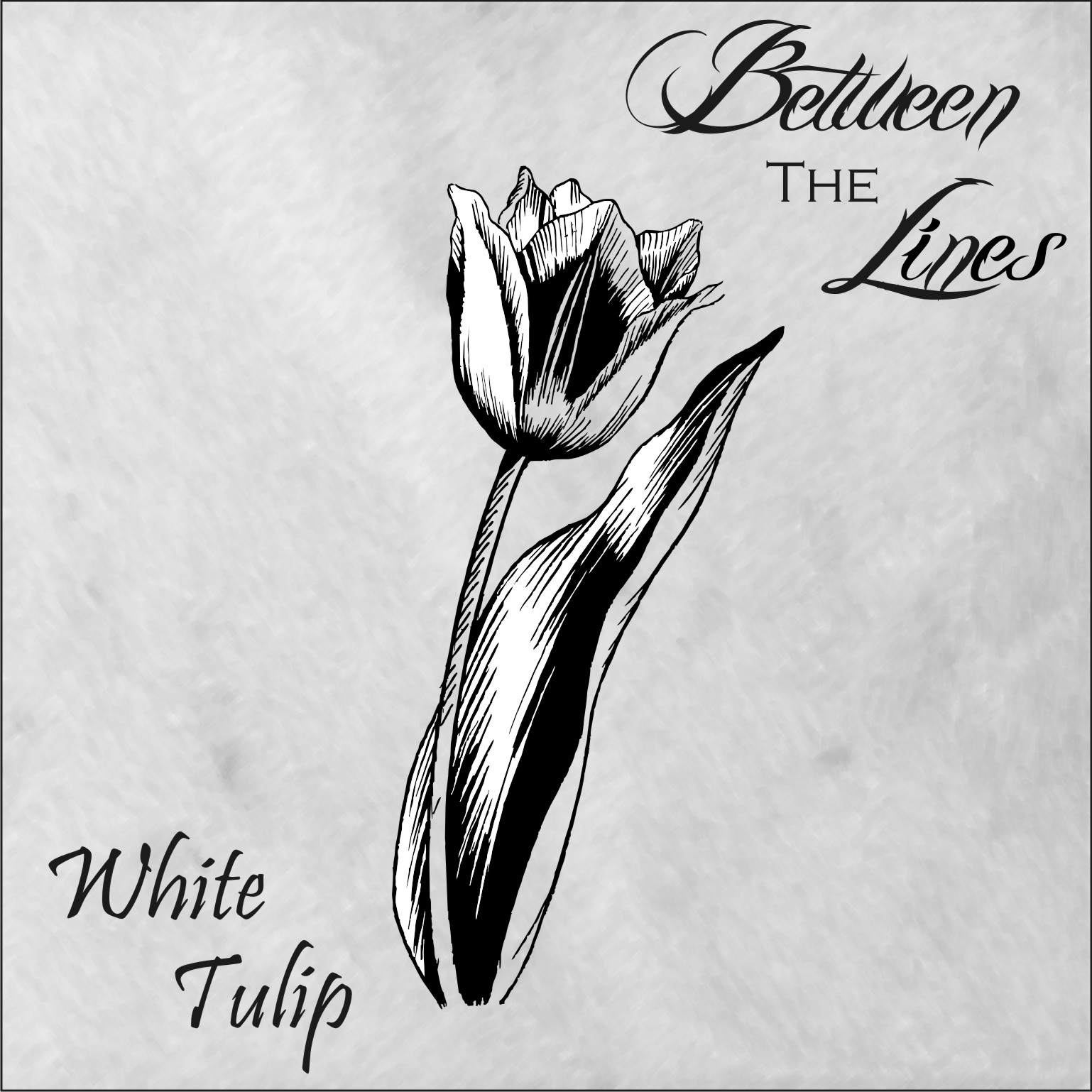 BETWEEN THE LINES – WHITE TULIP
